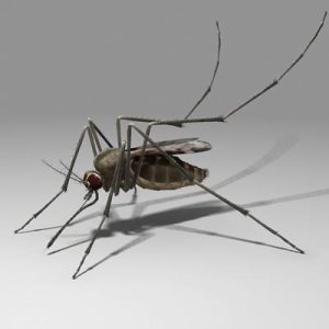 Graphics - MDC - Mosquito